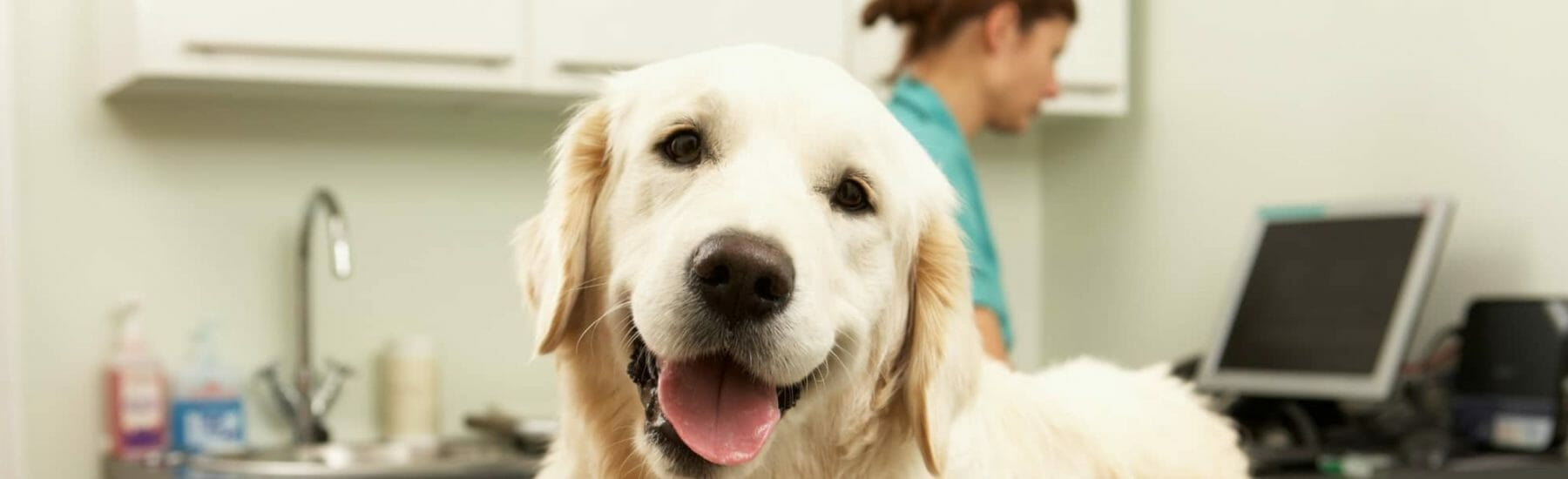 Surgical Services for Pets