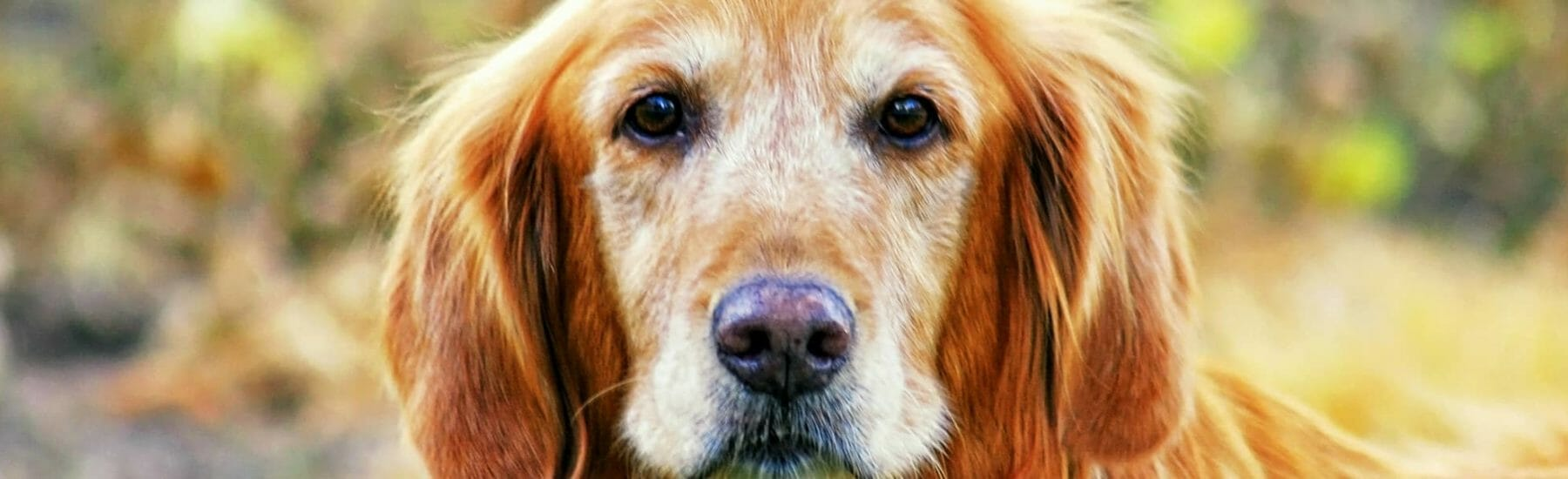 Cardiology Services for Pets