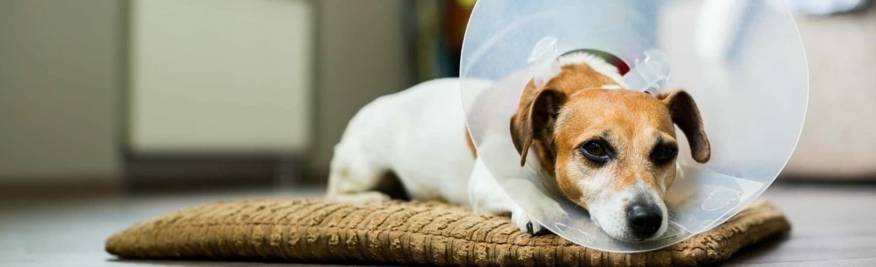 Spay and Neutering for Pets