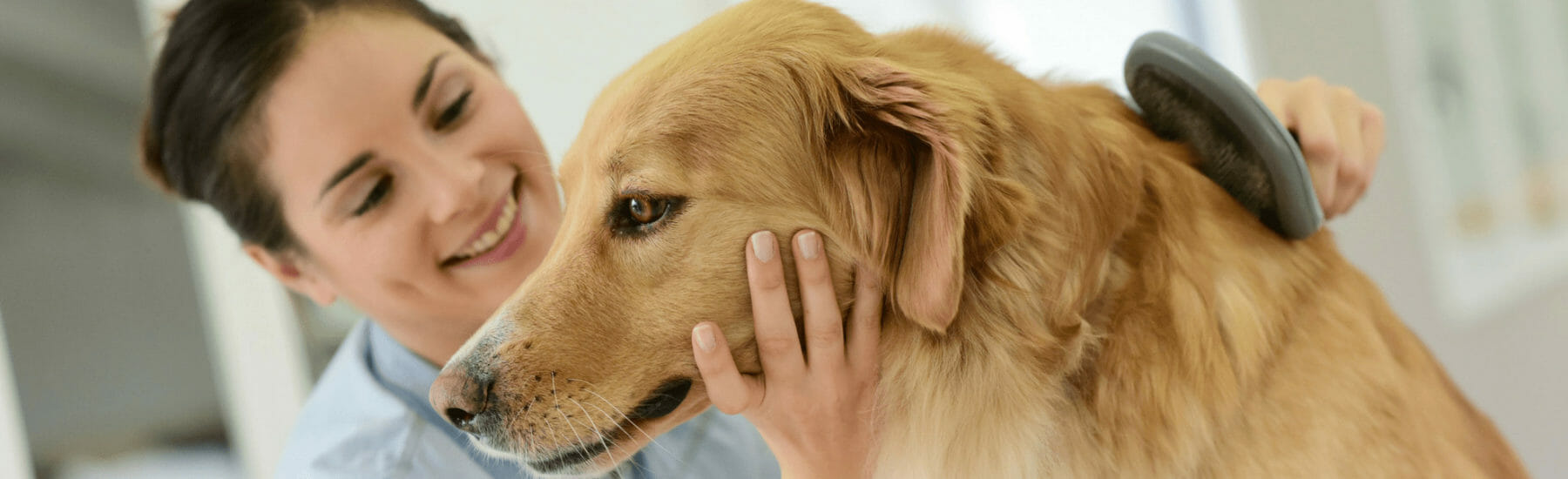 Grooming Services for pets
