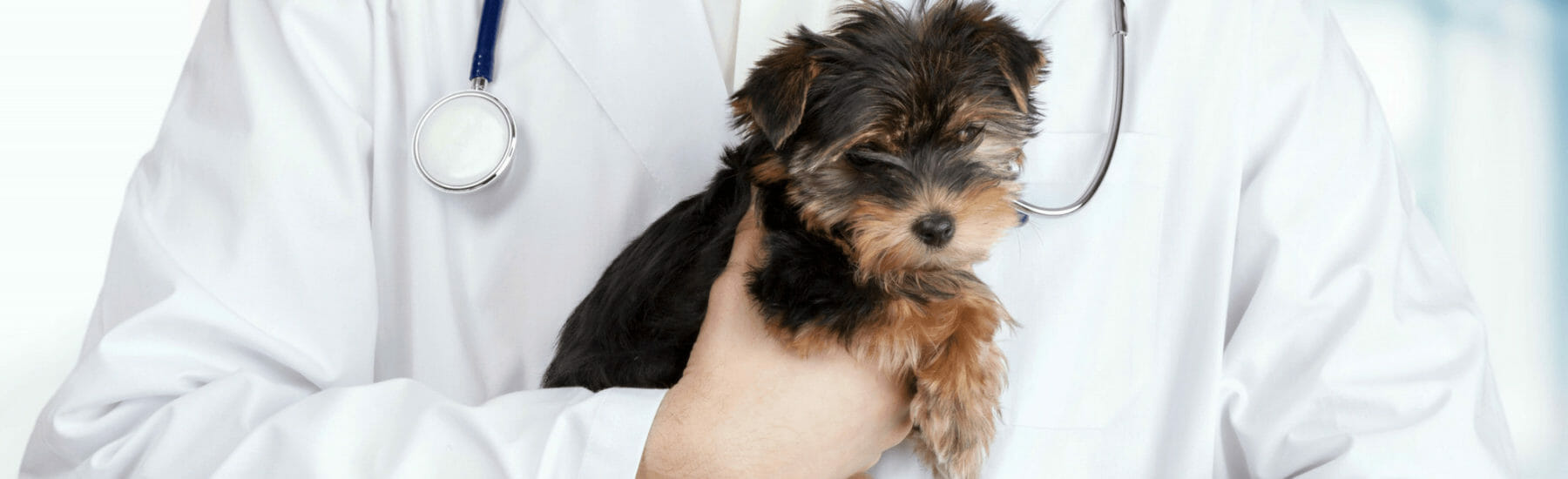Laparoscopy Services for Pets