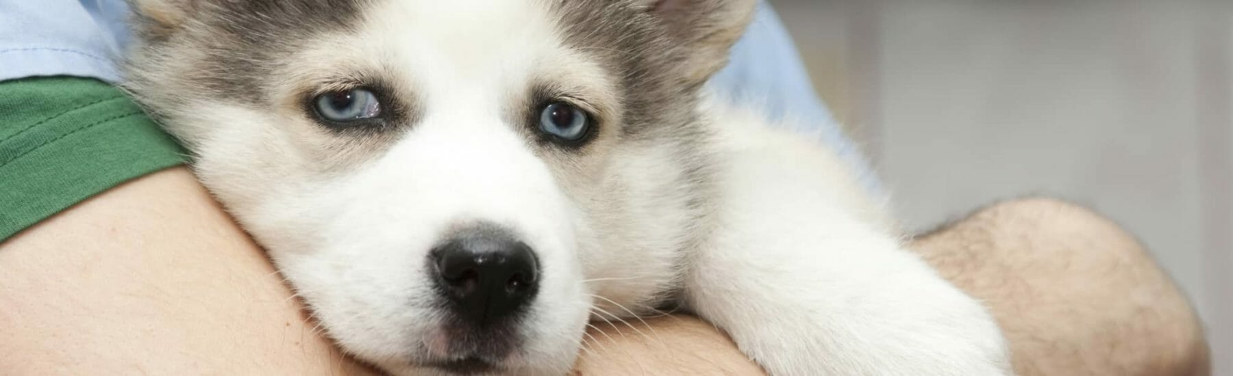 Heartworm Testing for Dogs